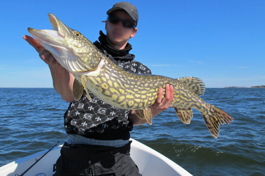 fiske i vänern